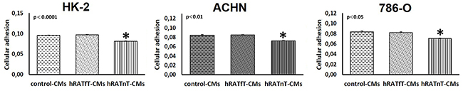 Effect of CMs from hRATnT and hRATfT on HK-2, ACHN and 786-O cell lines attachment.