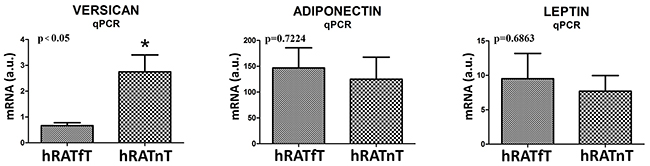 Versican, adiponectin and leptin gene expression from hRATnT and hRATfT.