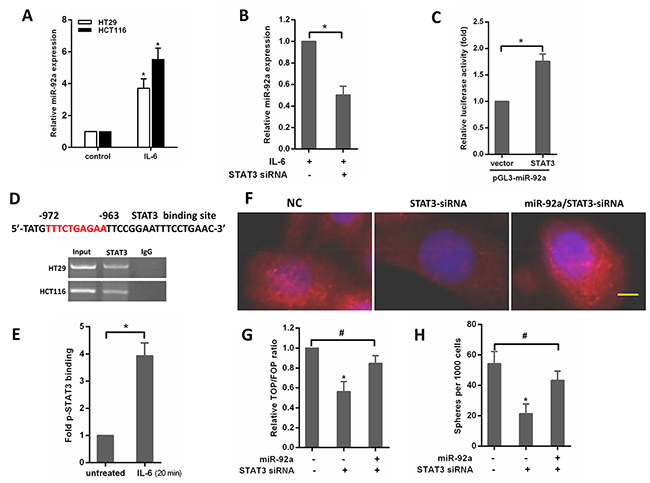 IL-6/STAT3 upregulates miR-92a expression to induce stemness of CRC cells.