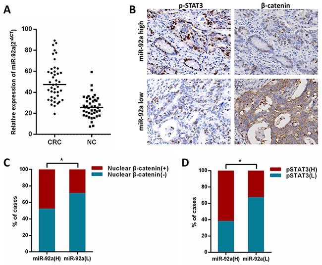 Clinical relevance of miR-92a with STAT3 and β-catenin in human CRC tissues.