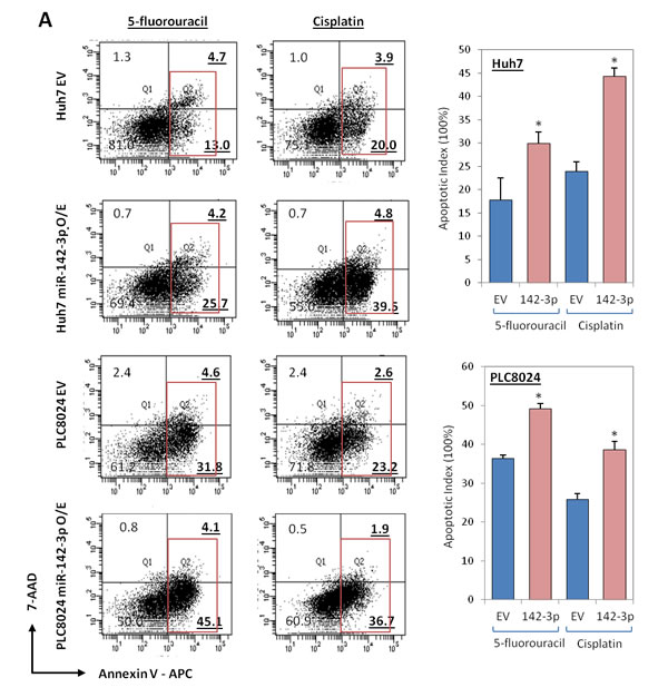 miR-142-3p overexpressing HCC cells exhibit a decreased ability to resist standard chemotherapy.