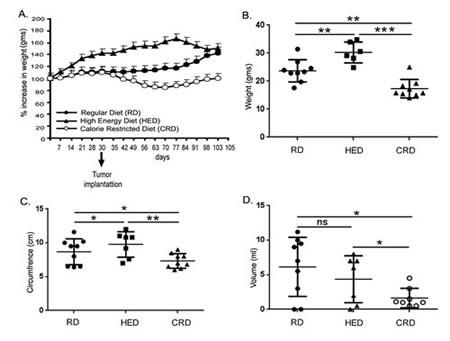 Effect of energy balance on ovarian tumor bearing mice.