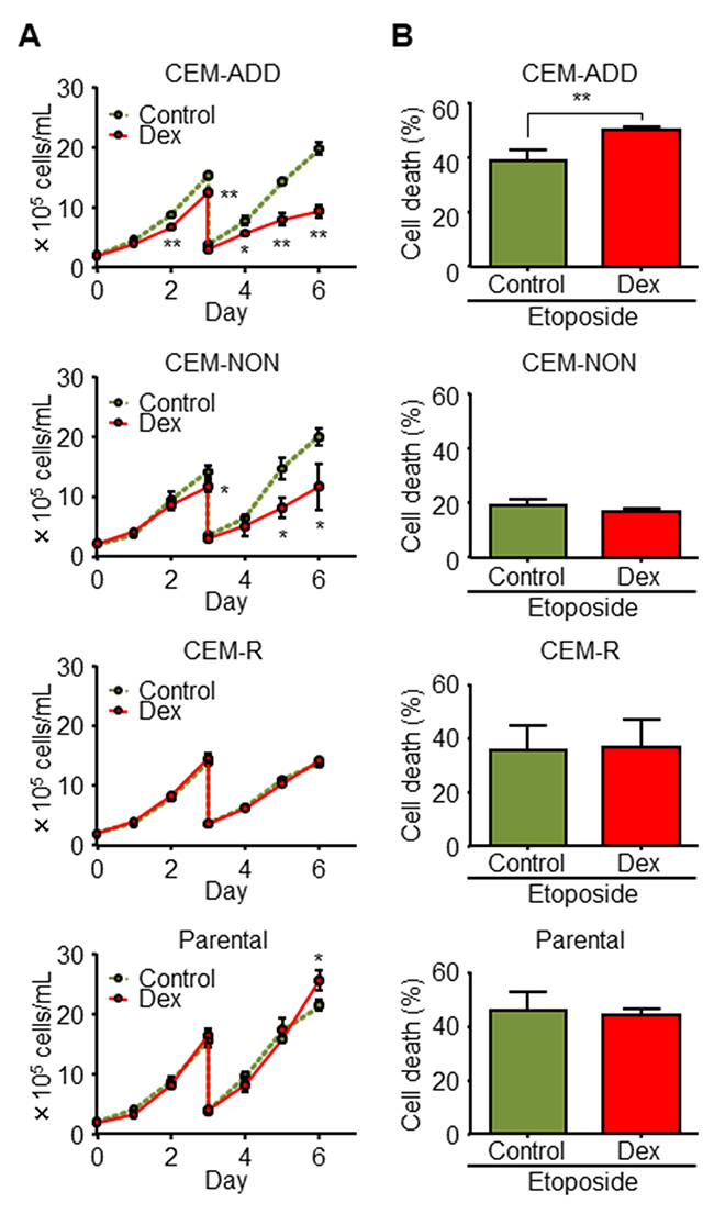 Combined treatment with dexamethasone (Dex) and anti-cancer drugs enhances anti-cancer effects against some acute lymphoblastic leukemia cells.