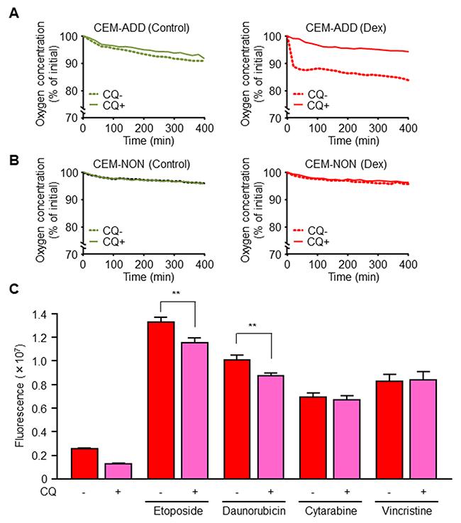 Dexamethasone (Dex)-induced mitochondrial activation via increased autophagy increases anti-cancer drug-mediated reactive oxygen species (ROS) production.