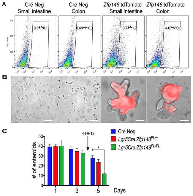 Single cell sorting of Zfp148: tdTomato+ cells and deletion of Zfp148 in stem cells.