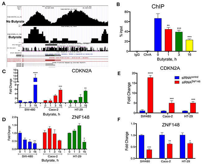 Butyrate decreased ZBP-89 binding to the mouse and human p16Ink4a promoter.