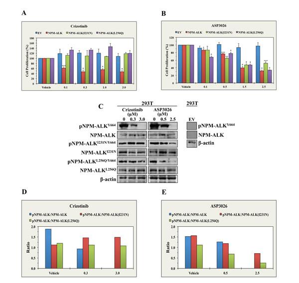 ASP3026 overcomes the resistance to crizotinib in NPM-ALK