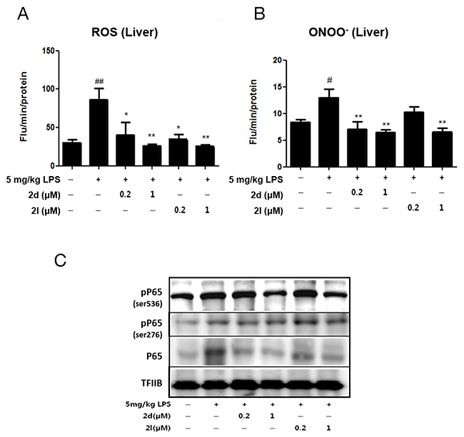 Compounds 2d and 2l ameliorate inflammation in lipopolysaccharide (LPS)-induced liver injury.