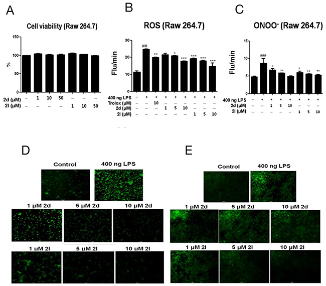 Inhibitory effects of compounds 2d and 2l on LPS-induced oxidative stress in macrophages.