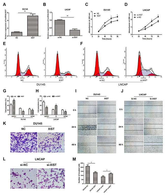 Influence of lncRNA XIST on the malignant phenotypes of prostate cancer in vitro.
