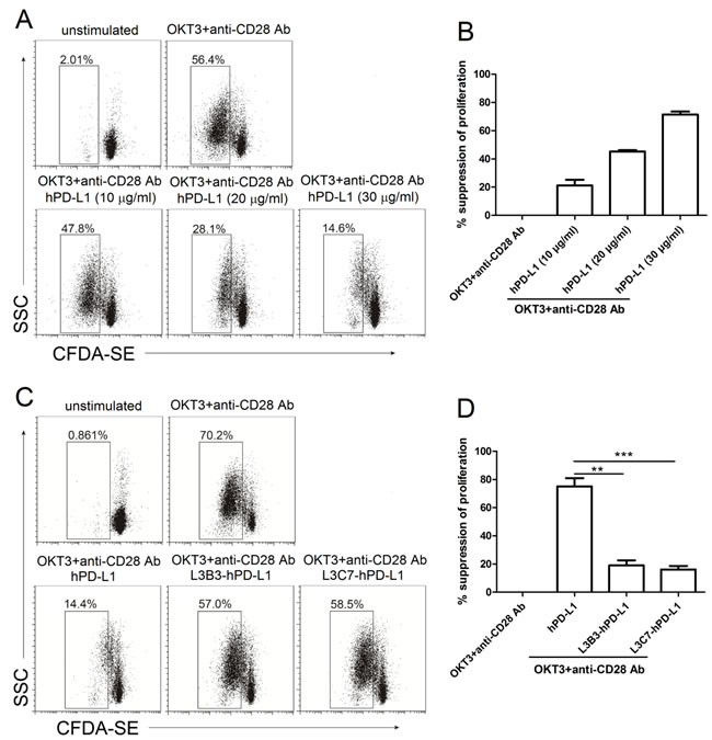 The inhibited proliferation of high affinity hPD-L1 variants/hPD-1 interaction on CD3-TCR activation was decreased.