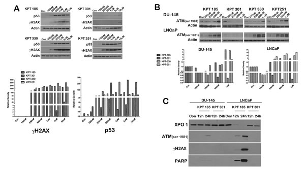 SINE inhibitors induce apoptosis in prostate cancer cells.