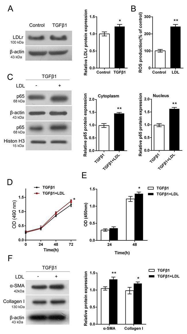 Activation of LDL-LDLr pathway in TGF-β1-stimulated HTFs.