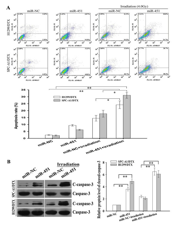 Effect of miR-451 expression on irradiation-induced apoptosis of docetaxel-resistant LAD cells.