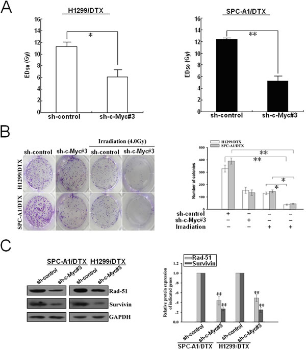 Silencing of c-Myc increases the sensitivity of docetaxel-resistant LAD cells to irradiation.