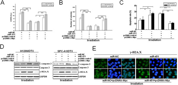 Overexpression of c-Myc partially reverses the effects of miR-451 upregulation on radioresistance of docetaxel-resistant LAD cells.