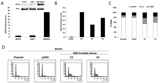 GDF15 overexpression alters breast cancer cell cycle profile.