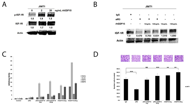 Effects of IGF-1R inhibition on GDF15-stimulated EMT and invasion.