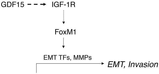 Schematic of model.