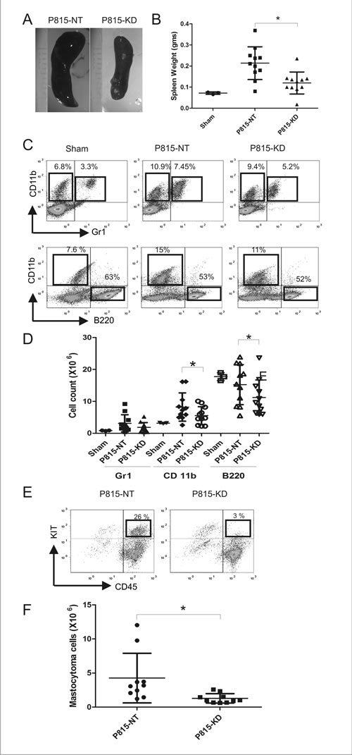 SHP2 silencing prevents splenomegaly in a mouse model of SM.