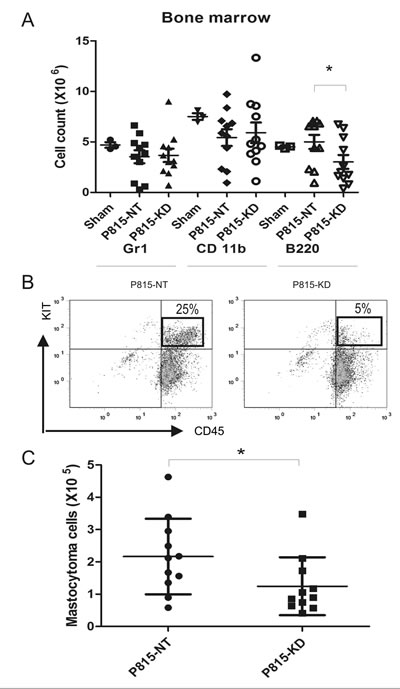 SHP2 silencing limits mastocytoma infiltration of bone marrow in a mouse model of SM.