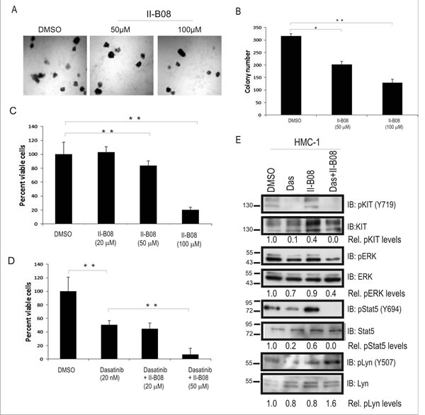 SHP2 phosphatase activity is required for sustaining growth and survival of HMC-1 cells.