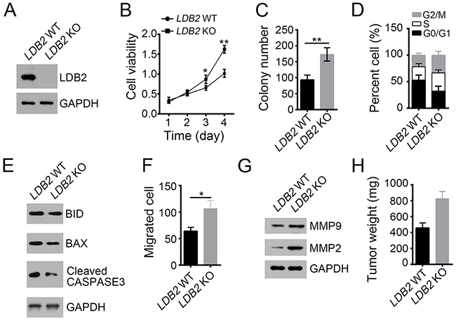 LDB2 deletion promotes liver cancer cell proliferation and migration.