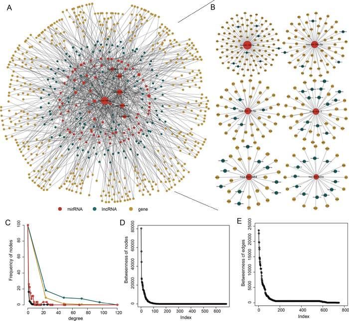 The PAAD-specific ceRNA network.