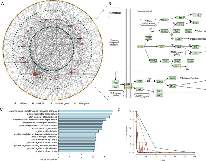 Properties of the hallmark gene-related ceRNA network (HceNet).