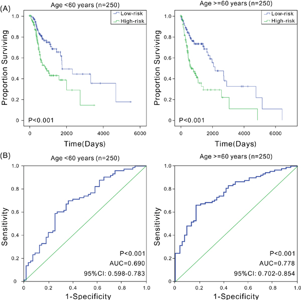 Kaplan-Meier and ROC analyses for the overall survival of patients in different age groups.