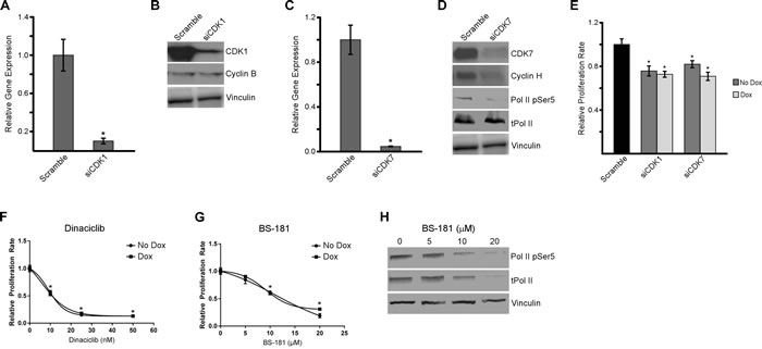 Inhibition of CDK1 and CDK7 decreases proliferation of TNBC cells.