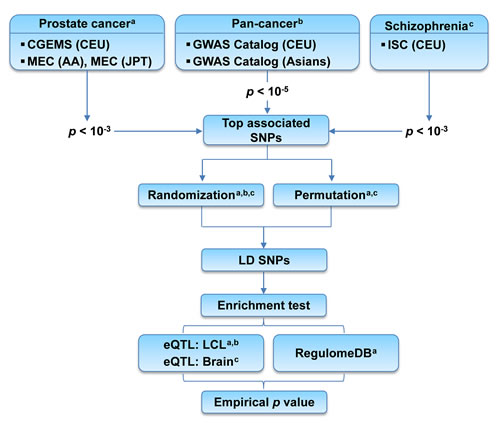 Flow chart of the enrichment analysis of top associated SNPs with prostate cancer.