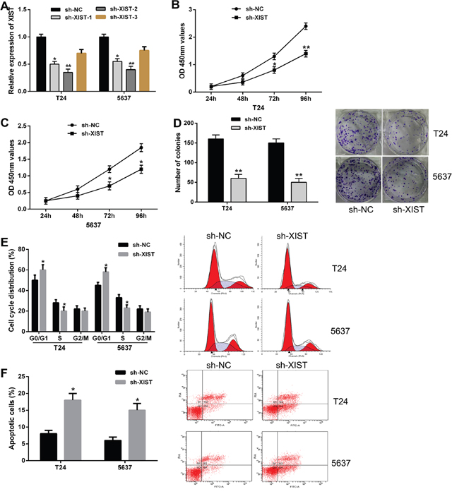 Knockdown of XIST inhibited cell proliferation, induced cell cycle arrest and promoted cell apoptosis in bladder cancer cells.