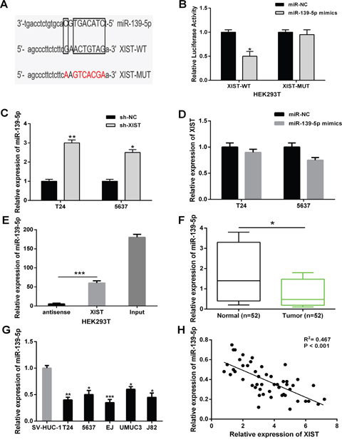 XIST directly interacted with miR-139-5p in bladder cancer cells.