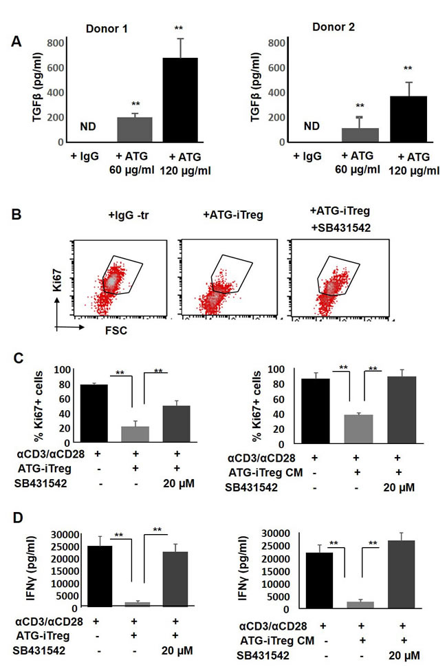 The role of TGFβ in ATG-related Treg induction and their suppressive capacity.