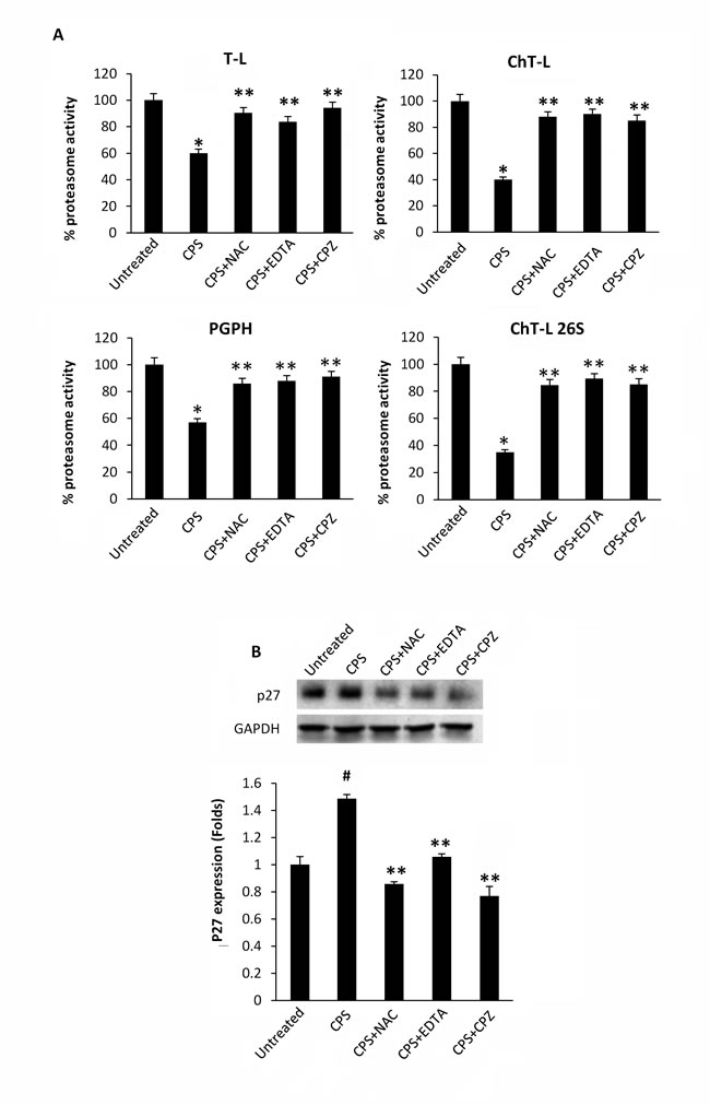 CPS-mediated inhibition of enzymatic proteasome activity is ROS-, Ca