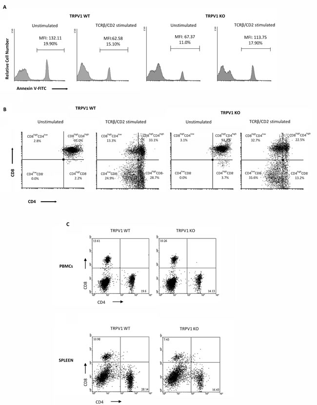 Knock-out of TRPV1 gene impairs positive thymic selection and affects peripheral blood and spleen CD4