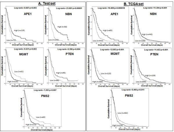 A Kaplan Meier survival curves for overall survival in glioblastoma patients in the Test (A) and TCGA (B) datasets stratified by mRNA expression of