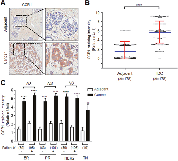 Role of CCR1 in the invasion and metastasis of breast cancer cells.