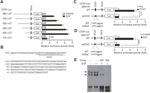 EGF induces CCR1 expression via STAT3.
