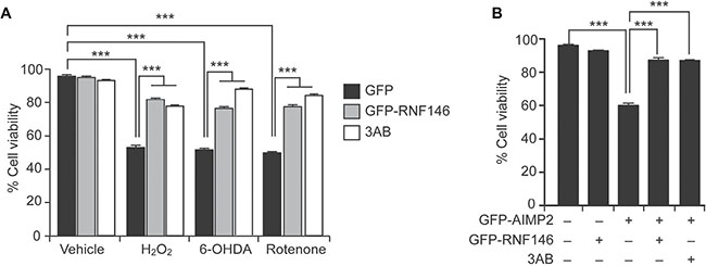 RNF146 expression prevents PARP-1-dependent cell death in SH-SY5Y cells.