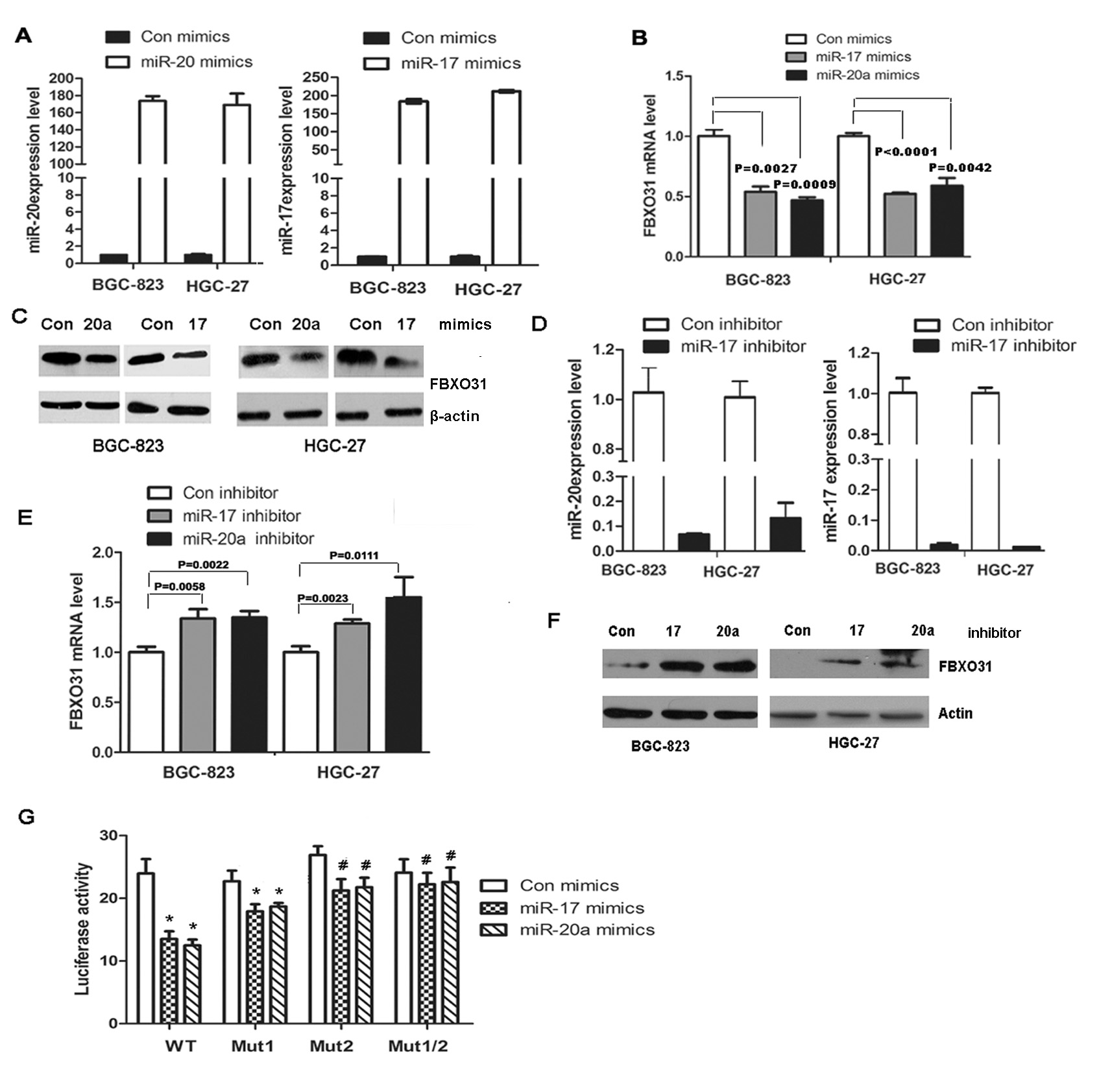 miR-20a and miR-17 directly bind to the 3′ untranslated region (UTR) of FBXO31 and inhibit FBXO31 mRNA and protein expression in human GC cells.