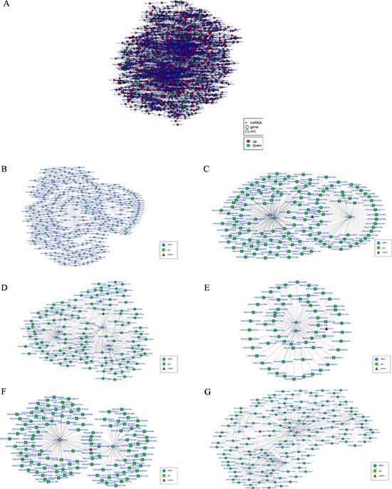 The circRNA-miRNA co-expression network.