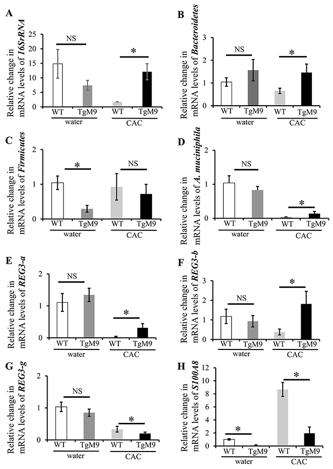 MMP9 in colonic epithelium attenuates microbiota depletion in CAC.