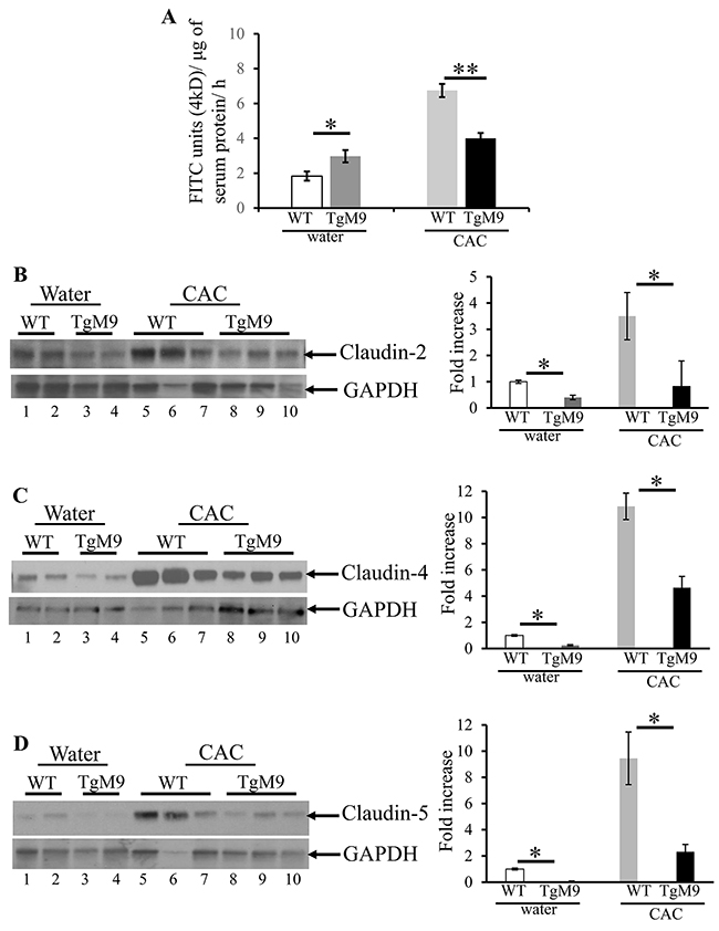 MMP9 maintains colonic epithelial barrier function and TJ assembly in CAC.