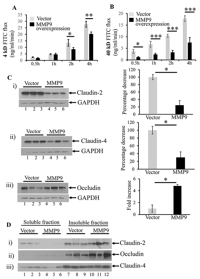 MMP9 overexpression is associated with decreased paracellular permeability.