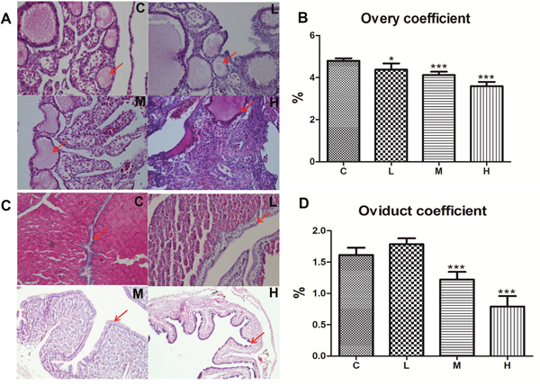 Effects of 4-NP exposure on the development of ovaries and oviducts in chicken.