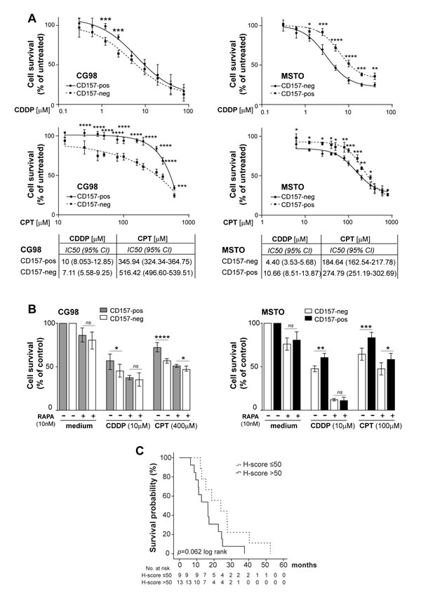 CD157 modulates responsiveness to chemotherapy in biphasic MPM.