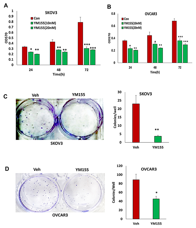 Inhibition of BIRC5 expression using YM155 reduced cell proliferation in ovarian cancer cells.