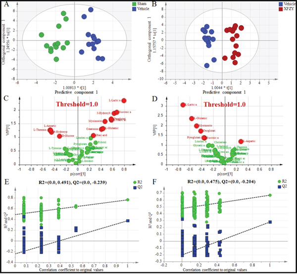 Differentiation of the Sham, Vehicle and XFZY groups on day 3 using multivariate analysis based on plasma spectral data of GC-MS.